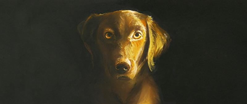 Tierportraits in Pastell